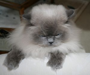 1001 Cats carnival